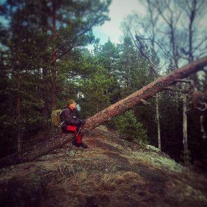 Markus metsässä